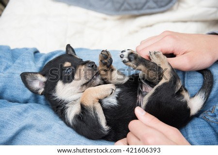 Boy Holding Small Black and Brown Puppy Outside