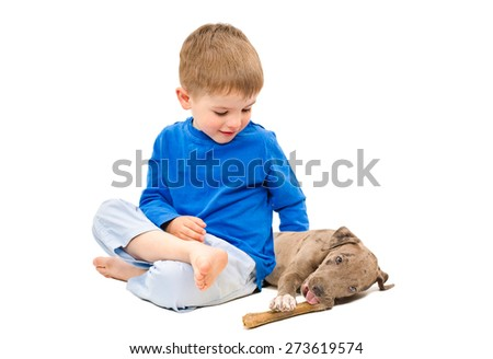 Boy hugging a puppy pit bull, gnawing bone, sitting isolated on white background - stock photo