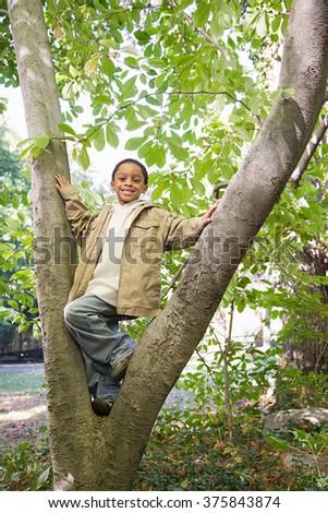 Boy in a tree - stock photo