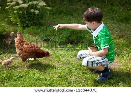 Boy is feeding chickens in the yard