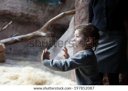 Boy looking at terrarium in the zoo