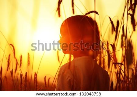 Boy on a wheat field at sunset - stock photo