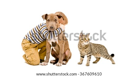 Boy, pitbull puppy and cat together, isolated on white background - stock photo