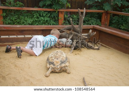 Boy playing with goat, rabbit and turtle in sandbox - stock photo