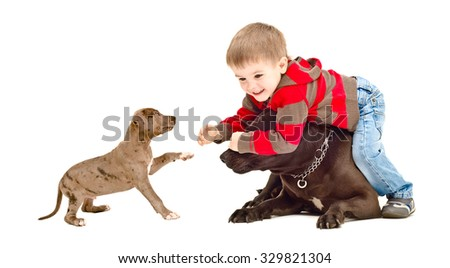Boy playing with the dog and puppy isolated on white background - stock photo
