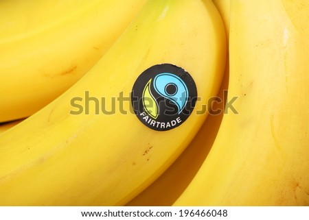 BRACKNELL, ENGLAND - June 02, 2014: Imported bananas bearing the Fairtrade Foundation sticker. Founded in 1992 the organization promotes global trade with marginalized workers and their communities - stock photo