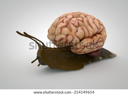 Brain and Snail Concept of a slow brain - stock photo