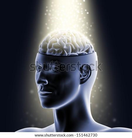 Brain - 3D illustration. - stock photo