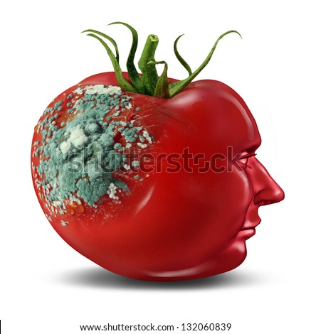 Brain decay and dementia and aging as memory loss concept for human cancer disease or an Alzheimer's illness with the medical icon of a tomato with mold rotting on a shape of a human head on white.