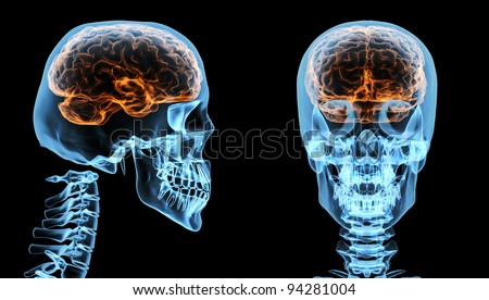 Brain inside skull - stock photo