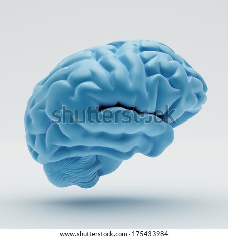 Brain isolated on white background - stock photo