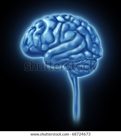 brain lobe sections divisions of mental neurological lobes activity isolated - stock photo