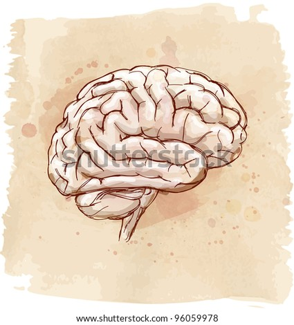 brain sketch & vintage background. Bitmap copy my vector - stock photo
