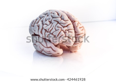 brain three-quarter view, isolated on white background