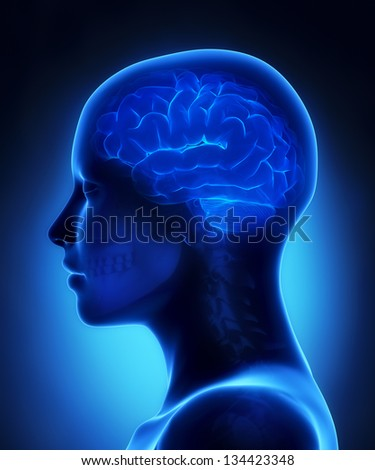 Brain x-ray view - stock photo