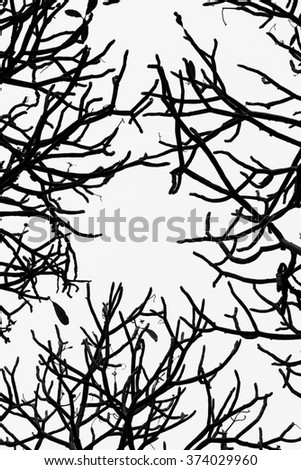 branch abstract black and white background