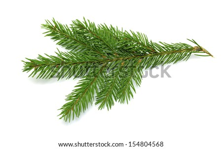 branch and cone on a white background - stock photo