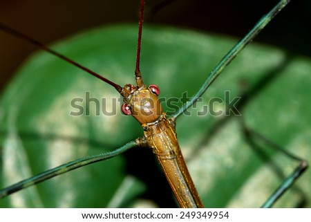 Branch beetle on leaf - stock photo