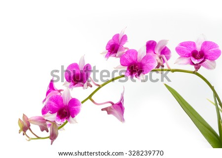 Branch blooming purple orchid isolated on white background - stock photo