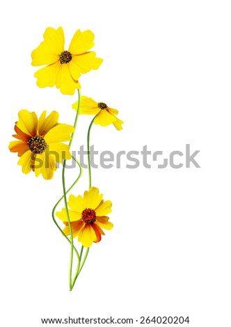 branch carnation flowers isolated on white background - stock photo
