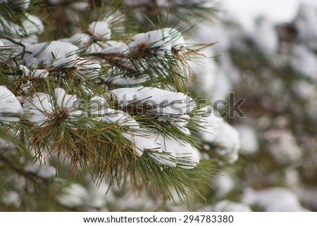 Branch covered in snow - stock photo