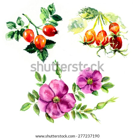 Branch dog-roses. Berries miniatures. Watercolor hand drawn illustration - stock photo