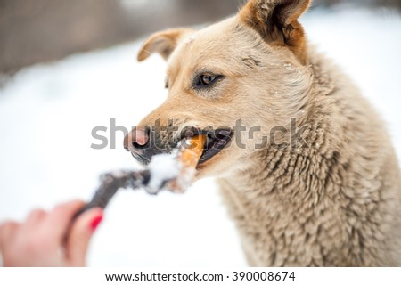 Branch eating dog portrait - stock photo