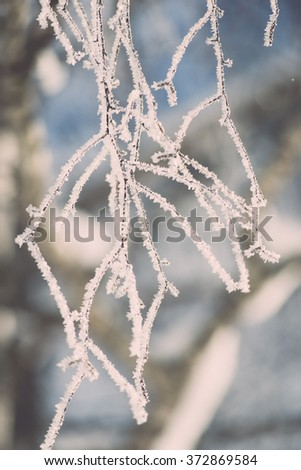 branch in hoar frost on cold morning in winter snow - vintage effect toned