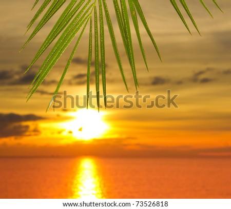 Branch Ocean Sea - stock photo