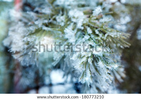 branch of a conifer with snow - stock photo