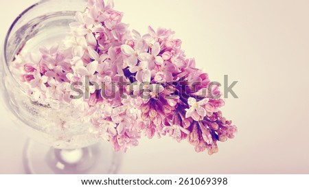 Branch of a lilac lilac in a glass. - stock photo