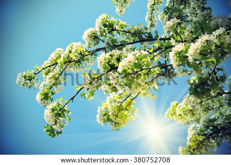 Branch of a spring tree with beautiful white flowers on blue sky - stock photo