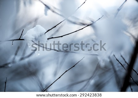 Branch of a tree in hoarfrost on a background of blue sky - stock photo
