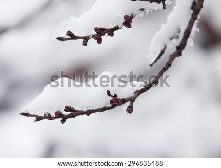 branch of a tree in the snow in the winter - stock photo