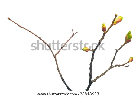 Branch of a tree isolated - stock photo