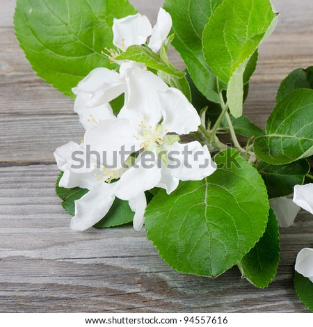 Branch of an apple-tree with a flower - stock photo