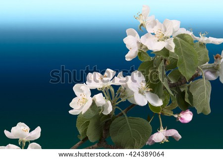branch of Apple blossoms on a stylized sea background - stock photo