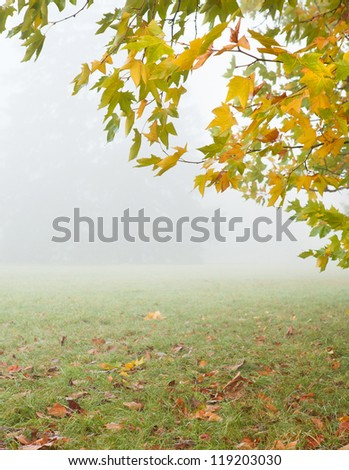 Branch of autumn tree and meadow in the mist, landscape