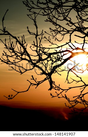Branch of bald tree at sunset