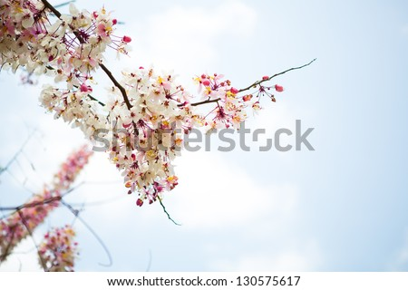 Branch of beautiful pink flower