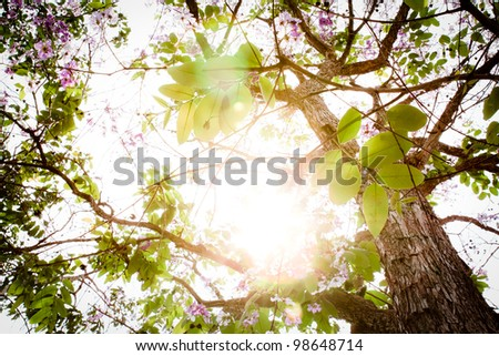 Branch of beautiful pink flower with sun ray - stock photo