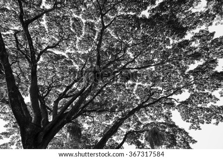branch of big tree nature in black and white - stock photo