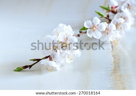 Branch of cherry blossom on wet surface, symbol of spring freshness beauty and purity, spa background - stock photo