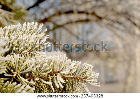 branch of Christmas tree on snowy background - stock photo