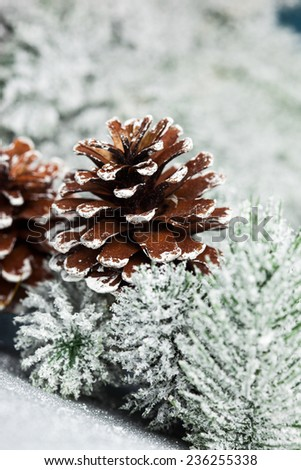 branch of Christmas tree with pinecone - stock photo