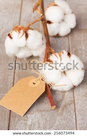 Branch of cotton plant bud  with empty paper tag  on wooden background - stock photo