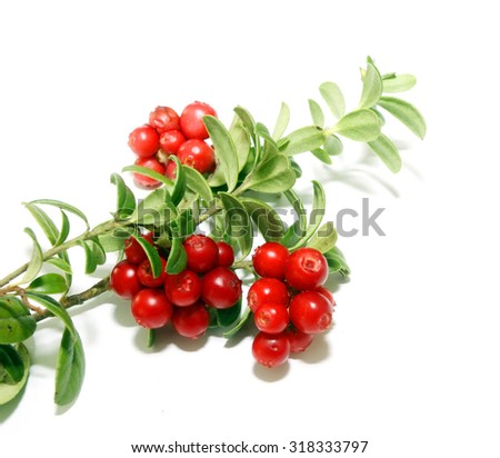Branch of cowberries isolated on white