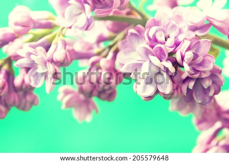 branch of cute lilac flowers - stock photo