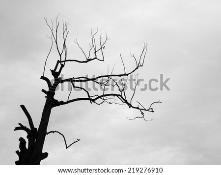 Branch of dead tree