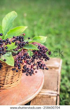 branch of elderberry with berries in basket over gardens background - stock photo